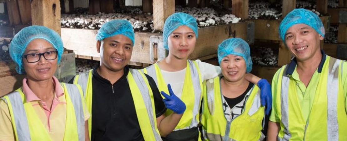 Mushroom harvest team