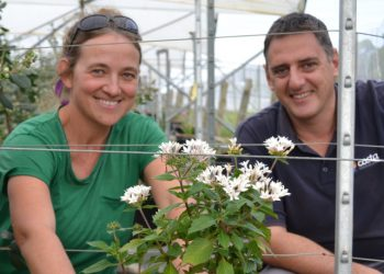 Research aims to ensure sweet future for bees