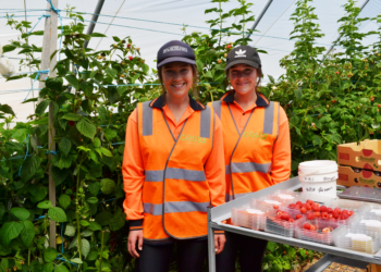 Uni students enjoying Tasmania harvest