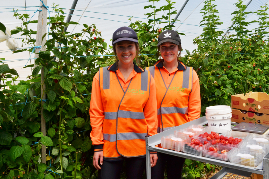 Laura and Emily Sutton supervising a raspberry picking crew