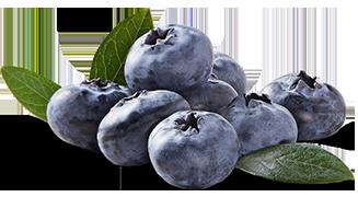 Costa-Group-Driscolls_Blueberry