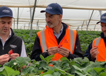 Berry harvest under way with Tassie workers