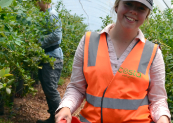 Research maps blueberry quality after harvest